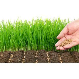 Гольф семена газонной травы (Коуел) НЕТ СЕМЯН