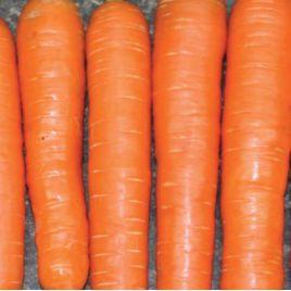 Нантес Стронг Топ семена моркови Нантес (Innova Seeds)