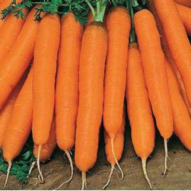 Нантская семена моркови среднеспелой 85-125 дн. (Rem seeds) НЕТ ТОВАРА