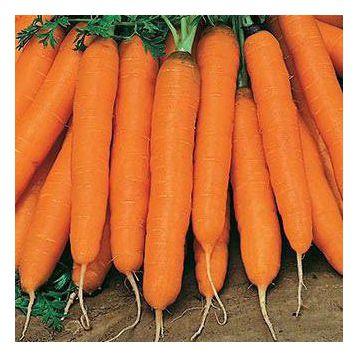 Нантская семена моркови (Rem seeds)