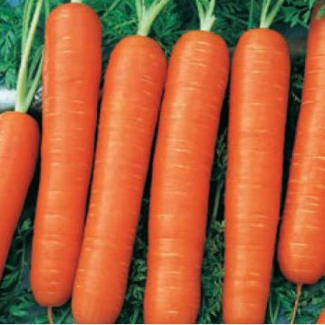 Натофи семена моркови (Свитязь)