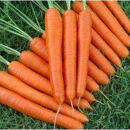 Ортолано семена моркови Нантес ранней 85-95 дн. (Hortus)