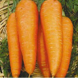 Осенняя королева семена моркови Флакке поздней 110-120 дн. (Свитязь) НЕТ ТОВАРА