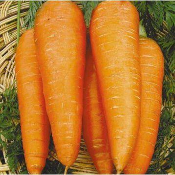 Осенняя королева семена моркови (Свитязь)