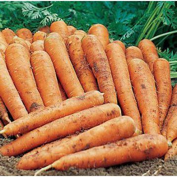 Памела семена моркови Нантес (SX)