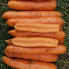 Майа F1 семена моркови Нантес (Tezier)