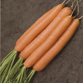 Джерада F1 семена моркови Нантес. (калибр меньше 1,6) (Rijk Zwaan)