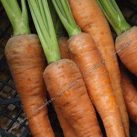 Флаккенария семена моркови (Свитязь)