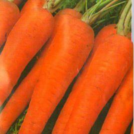 Флакко семена моркови Флакке (Euroseed)