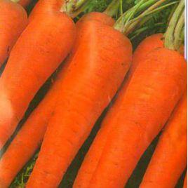 Флакко семена моркови Флакке поздней 140-160 дн (Hortus)