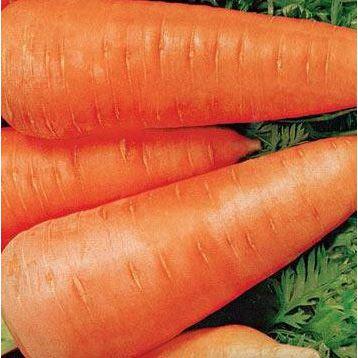Шантане Ред Коре семена моркови (Servise plus (GSN)