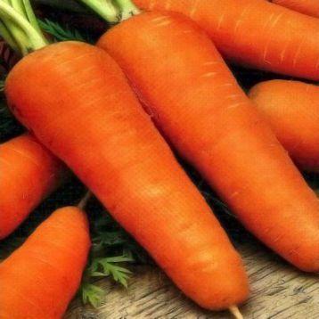 Шантане Роял семена моркови (SX)