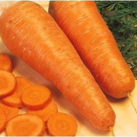 Шантане семена моркови средней 105-115 дн. (Hortus)