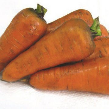 Шантане семена моркови (Свитязь)