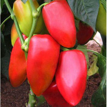 Благодар семена перца сладкого раннего 93-103 дн. св. желт./красн. конич. (Элитсорт семена) НЕТ ТОВАРА