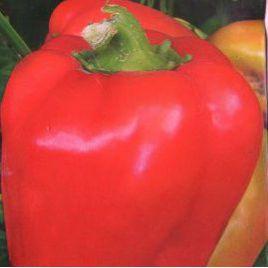 Генерал Топтыгин F1 семена перца сладкого тип Блочный среднего 100-110 дн. корот.куб. 210гр. 5мм св.зел./красн. (Элитный ряд)