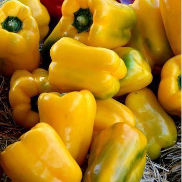 Желтый Дивосвит семена перца сладкого (Свитязь)