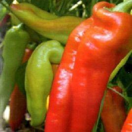 Красный рог семена перца сладкого (Элитный ряд)