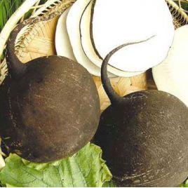 Круглая черная семена редьки (SAIS КЛ)