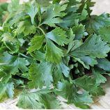 Селера листова насіння селери листової (Hem Zaden)