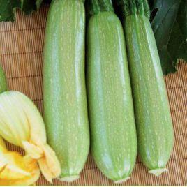 Билли F1 (INX 1405 F1) семена кабачка средне-раннего светло-зеленого (Innova Seeds)