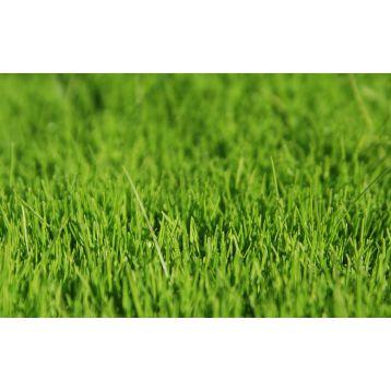 Универсальный газон семена газонной травы (Коуел)