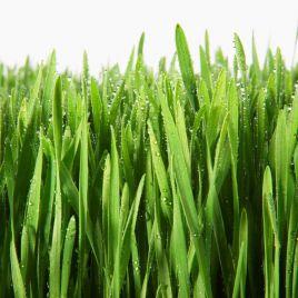 Декоративная Теневыносливая (Decorative Shadow) семена газонной травы (HERBA)НЕТ СЕМЯН