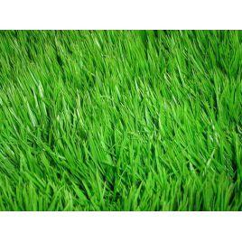 Клумбова семена газонной травы (Свитязь)