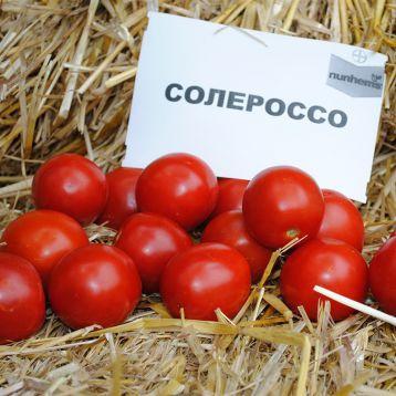 Солероссо F1 семена томата дет. дражированные (Bayer Nunhems)