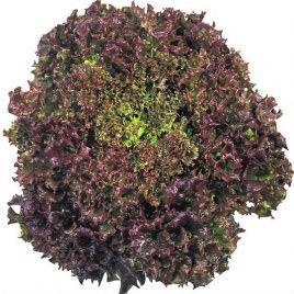 Революция семена салата тип Лолло Росса красн. дражированные (Nunhems)