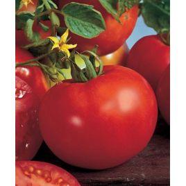 Магнум 44 F1 семена томата полудет. раннего окр. 200-250 гр. (Семко) НЕТ ТОВАРА