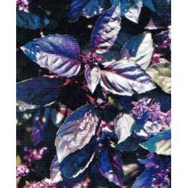 Платон семена базилика фиолетового (Solare Sementi)