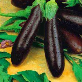 Алексеевский семена баклажана раннего 95-105 дн. 100-190 гр. (Семко)