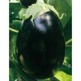 Ненси F1 семена баклажана раннего 75-85 дн. 60-80 гр. окр.-удл. (Семко) НЕТ ТОВАРА