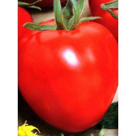 Аватар F1 семена томата индет. раннего окр. 250-300 гр. (Cora Seeds)