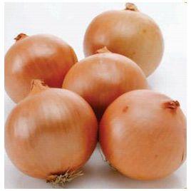 Фундадор F1 семена лука репчатого среднего 110-115 дн. (Cora Seeds)
