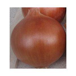 Ламика F1 семена лука репчатого позднего 120-125 дн. длинн. дня (Cora Seeds)