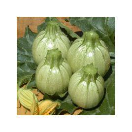 Раунд Бьюти F1 семена кабачка раннего светло-зеленого (United Genetic)