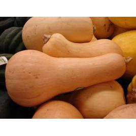 Волтгем батернат F1 семена тыквы мускатной средней 120 дн. 1,5-4 кг (United Genetics)