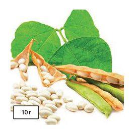 Карнелино белая семена фасоли овощной кустовой средней 60-70дн бел. (Anseme)