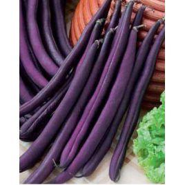 Фиолетовая семена фасоли спаржевой (Hortus)
