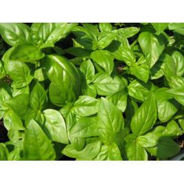 Геновезе семена базилика зеленого (Hortus)