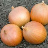 Зои F1 семена лука раннего 90-95дн (Enza Zaden)
