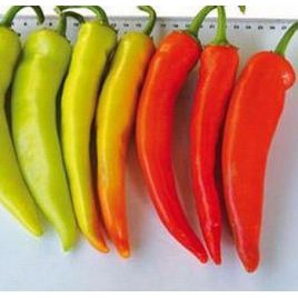 Хуэро F1 семена перца острого среднераннего 25-30 гр (United Genetics)