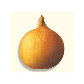 Аренал F1 семена лука репчатого позднего 130-140 дн. длинн. дня (Advanta)