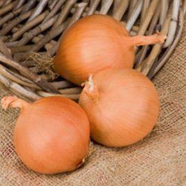 Бугатти F1 семена лука репчатого среднего 110-120 дн. (Advanta)