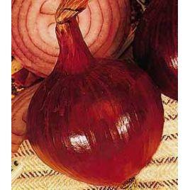 Ред Ампоста семена лука репчатого красного среднего 115 дн. длинн. дня (Innova Seeds)