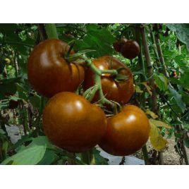 Будулай F1 семена томата индет. раннего окр.-припл. 150-160 гр. черн. (Элитный ряд)
