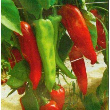 Димитри F1 семена перца сладкого (SAIS)