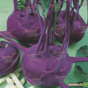 Модрава F1 семена капусты кольраби (Semo)